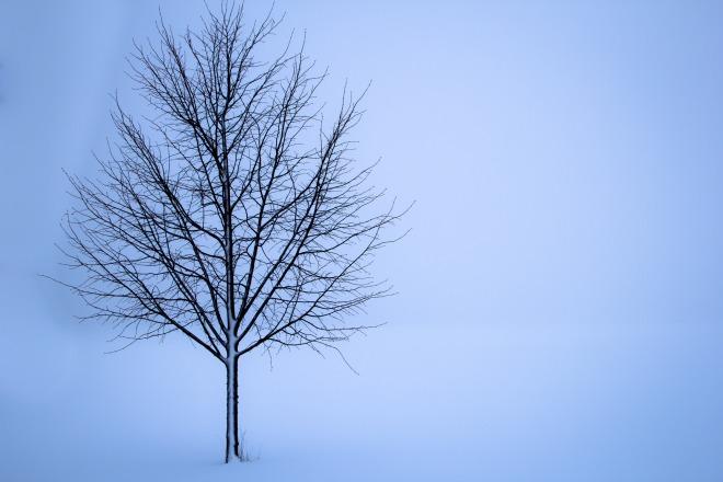 tree-1056598_1920