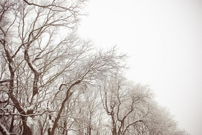 trees-864992_1920.jpg