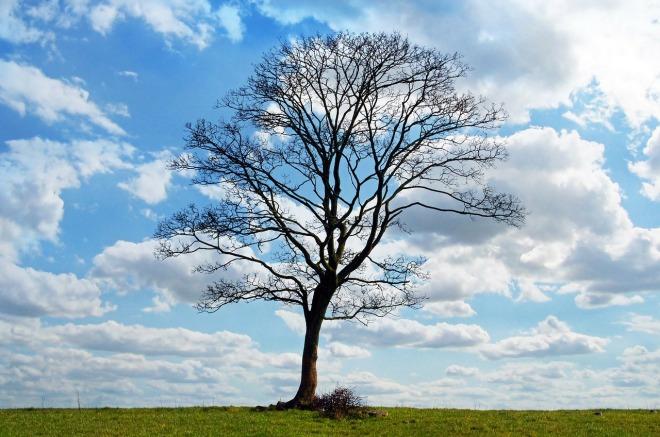 tree-164915_1280